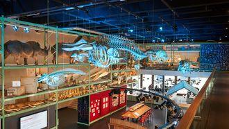 uitjes-dinosaurus-voorjaarsvakantie-naturalis