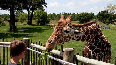 leukste dierentuinen. giraffe