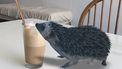 Een egeltje op tafel bij een koffie via Google 3D Dieren