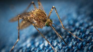 7 kleine beestjes zoals muggen en teken en wat je er tegen kunt doen