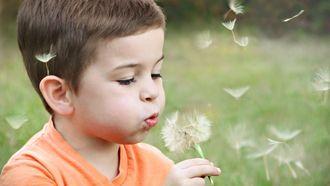 autisme / kind blaast tegen paardenbloem