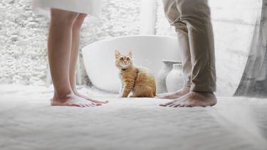 Co-ouderschap: Ouders staan lijnrecht tegenover elkaar, de kat kijkt toe
